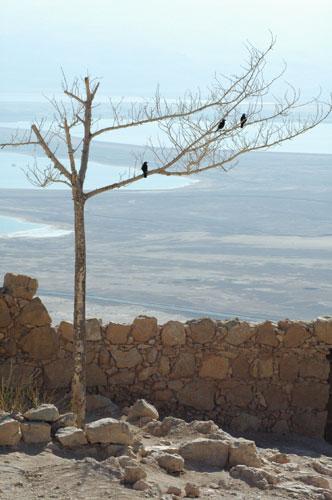 La minéralité sublime des sites autour de la Mer morte.