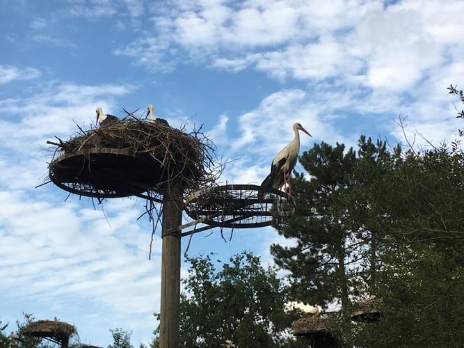 Spectacle des Oiseaux en Vol et nocturne au Parc Des Oiseaux