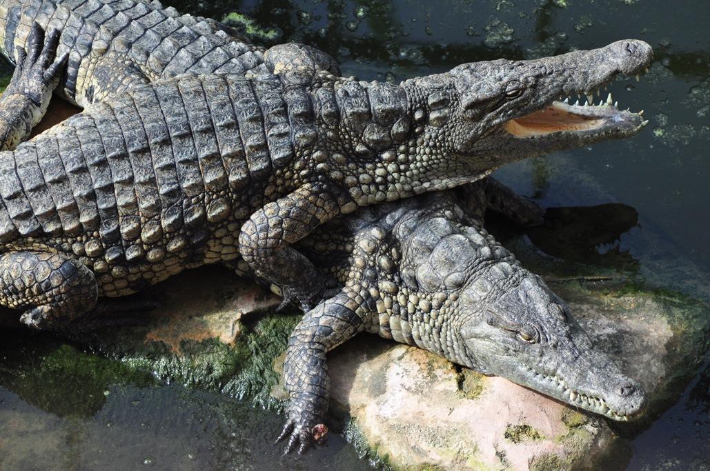 vienne ferme aux crocodiles