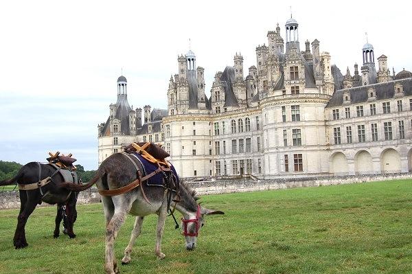 randonneeavecane cdt chateau