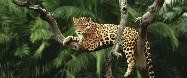 terresinfinies cdt tigre