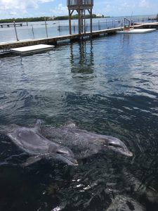 Keys, Dauphins, Florida, Dolphins Research,