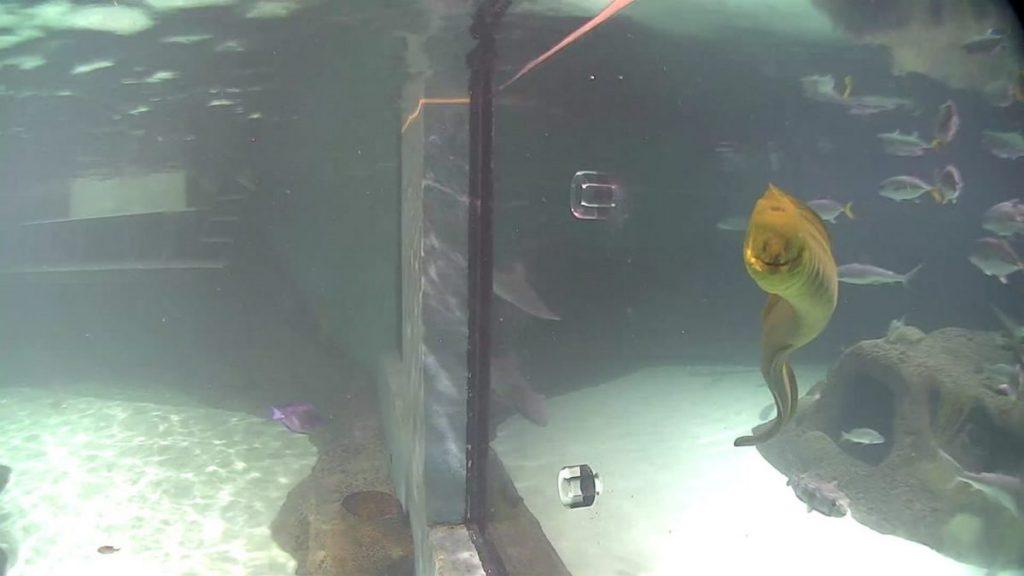 encounter-aquarium-requins-smiling Eel