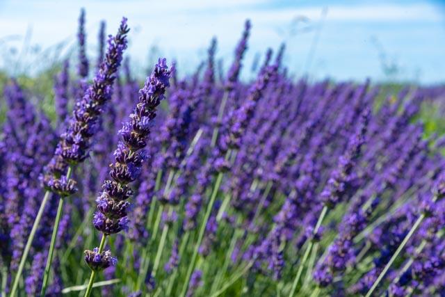 Un Mas en Provence, un voyage sensoriel de la plante au parfum