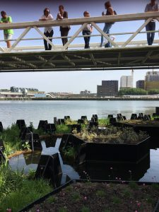 Respirer vert à Rotterdam ©JL