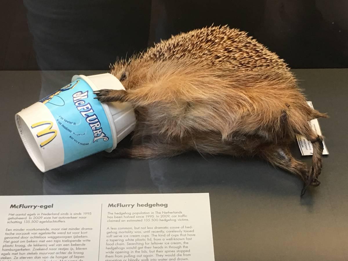 Le Musée des animaux morts à Rotterdam