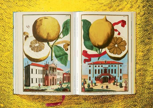 The book of Citrus Fruits. Les planches mêlent agrumes, villas, art de vivre…