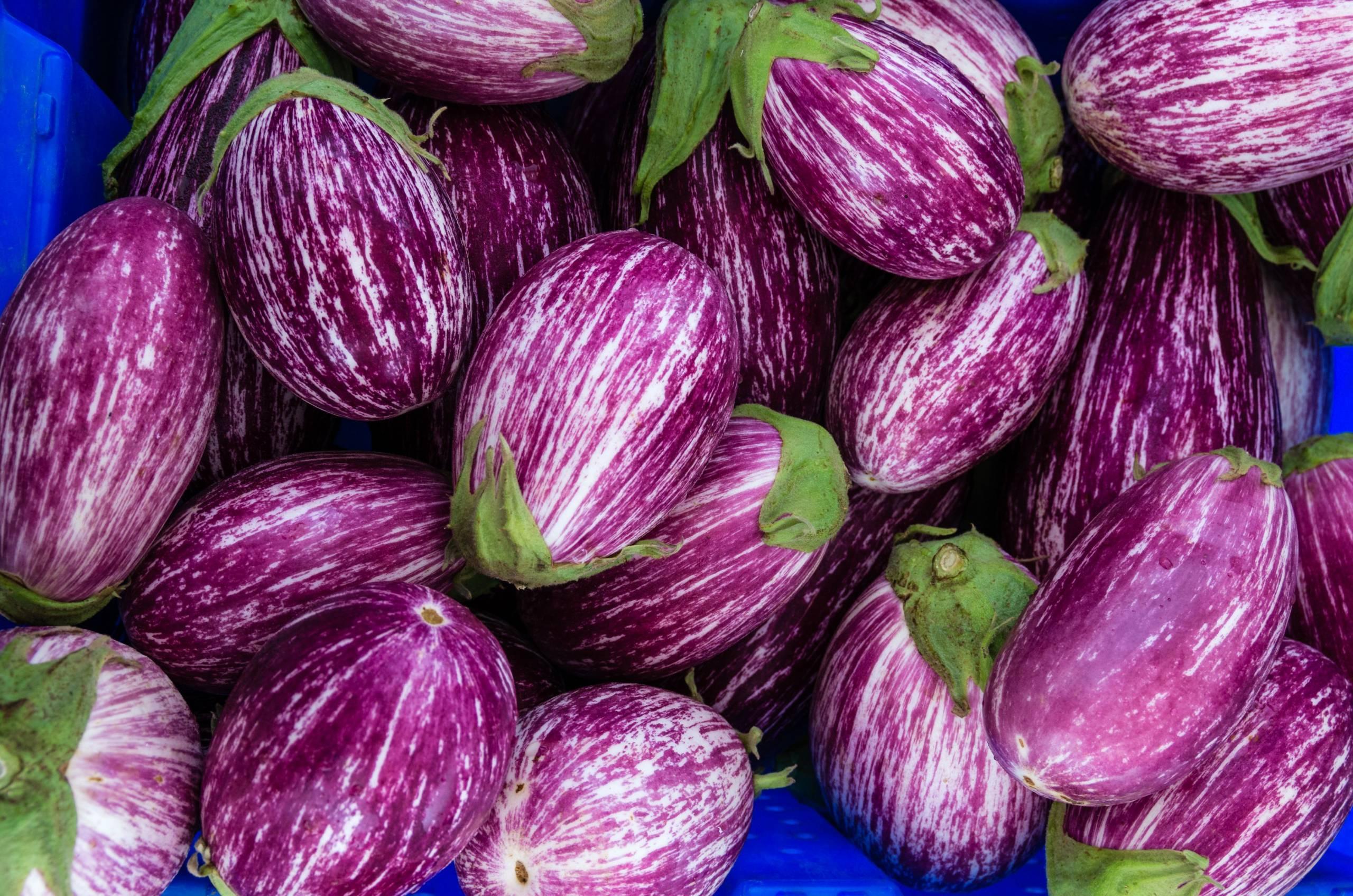 Chez Jean Martin, l'aubergine passe du champ à l'assiette